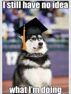 Intelligent-Husky-Graduates-College-Still-Doesnt-Know-What-To-Do-With-His-Degrees
